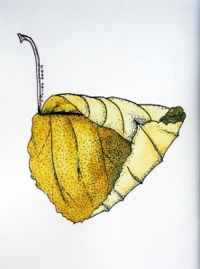 LEAF Pen and watercolour